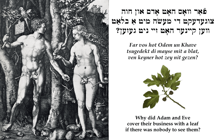 Yiddish: Why did Adam and Eve cover their business with a leaf if there was nobody to see them?