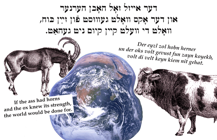 Yiddish: If the ass had horns and the ox knew its strength, the world would be done for.