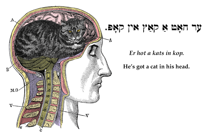 Yiddish: He's got a cat in his head.