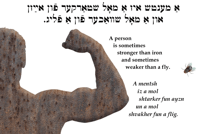 Yiddish: A person is sometimes stronger than iron and sometimes weaker than a fly.