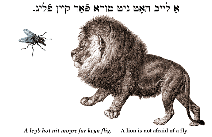 Yiddish: A lion is not afraid of a fly.