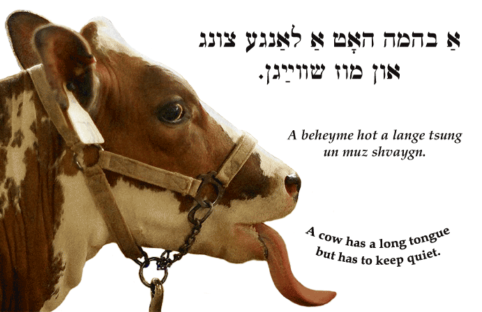 Yiddish: A cow has a long tongue but has to keep quiet.