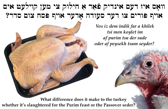 Yiddish: What difference does it make to the turkey whether it's slaughtered for the Purim feast or the Passover seder?
