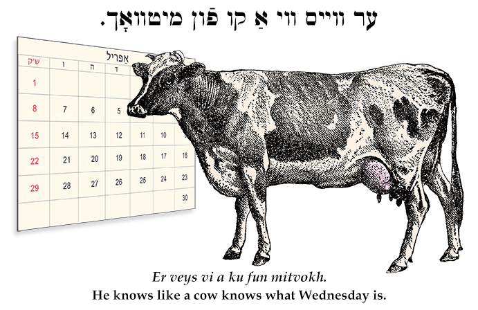 Yiddish: He knows like a cow knows what Wednesday is.